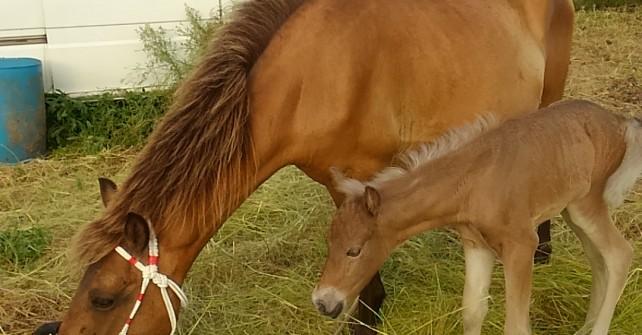 馬が産まれた!!!!